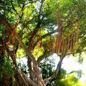Stunning tree!